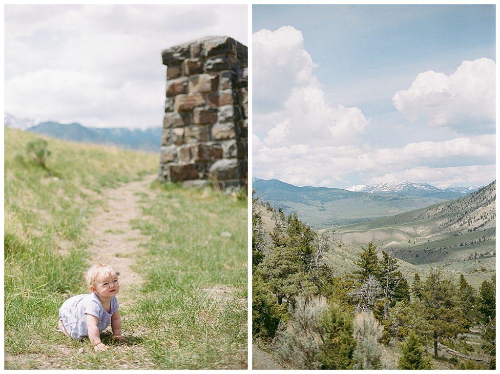 Olivine Fox Bozeman Montana Photographer - Yellowstone National Park