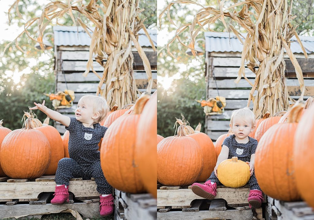Olivine Fox - Warm Glow Candle Company - Fall Mini Session - Maryland Family Photographer - Pennsylvania Family Photographer - Pumpkin Patch Photoshoot Fox