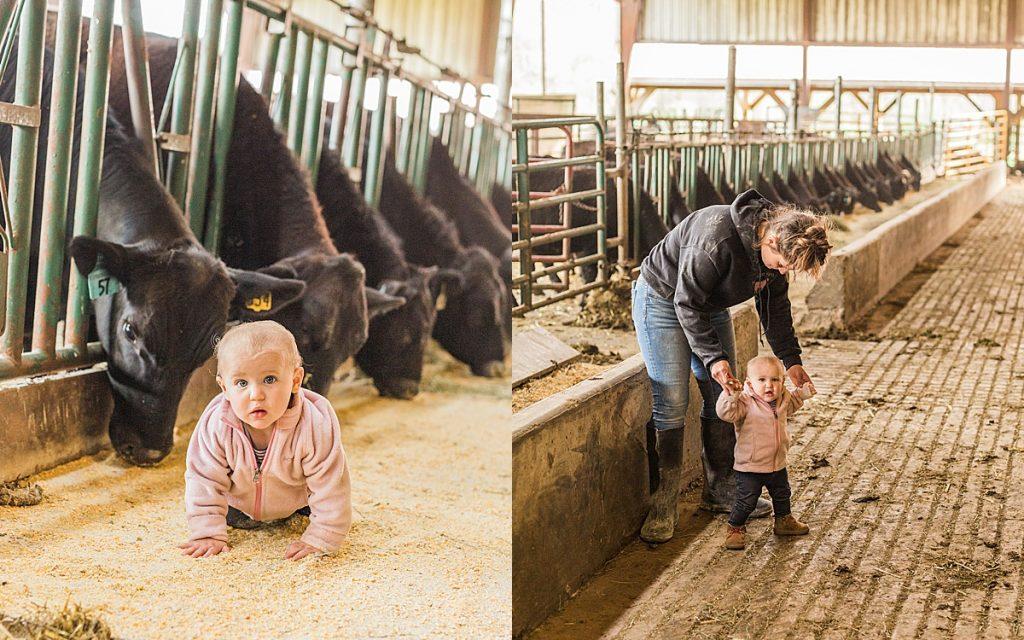Olivine Fox - Frederick Maryland Photographer - Maryland Farms - Midnight Farm - Farm Lifestyle Photos - Maryland Angus Cattle - Carroll County Maryland - Westminster Maryland