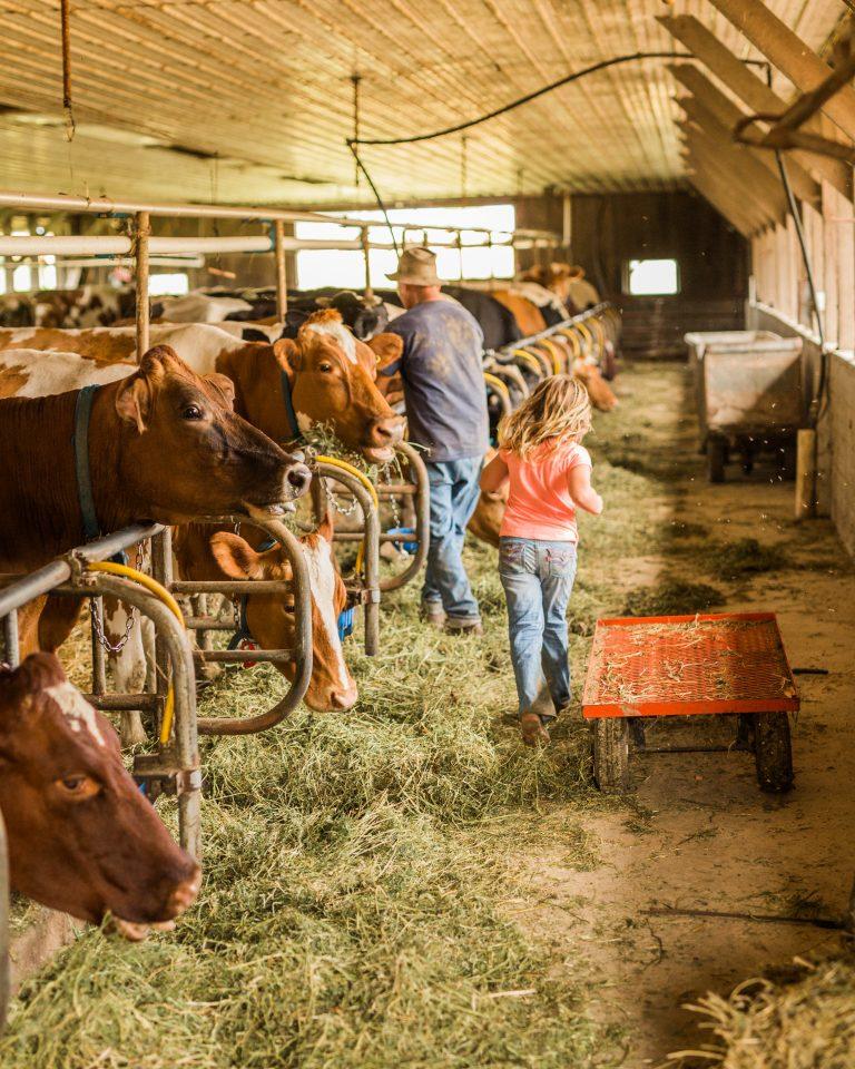 Daily Crisis Farm - Maryland Dairy Farm - White Fall Maryland Farm - Harford County - Olivine Fox