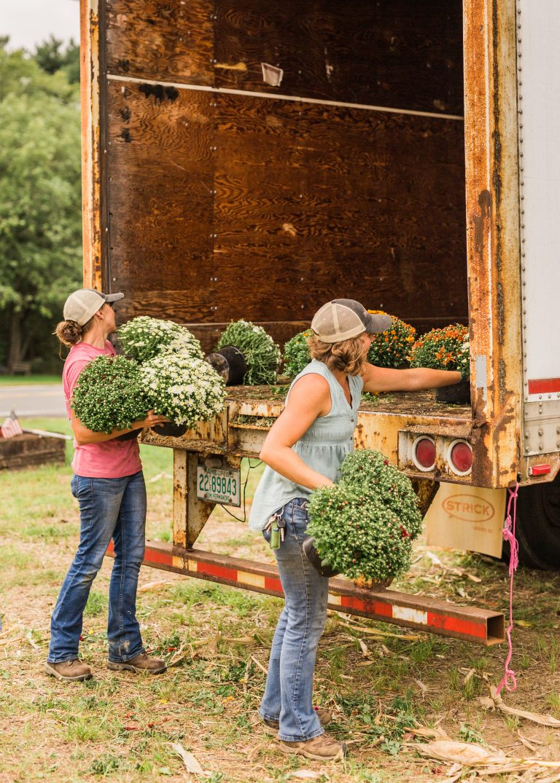 Olivine Fox - Local Homestead Products - Maryland Farm -New Windsor Maryland Market - Carroll County Maryland - Mums
