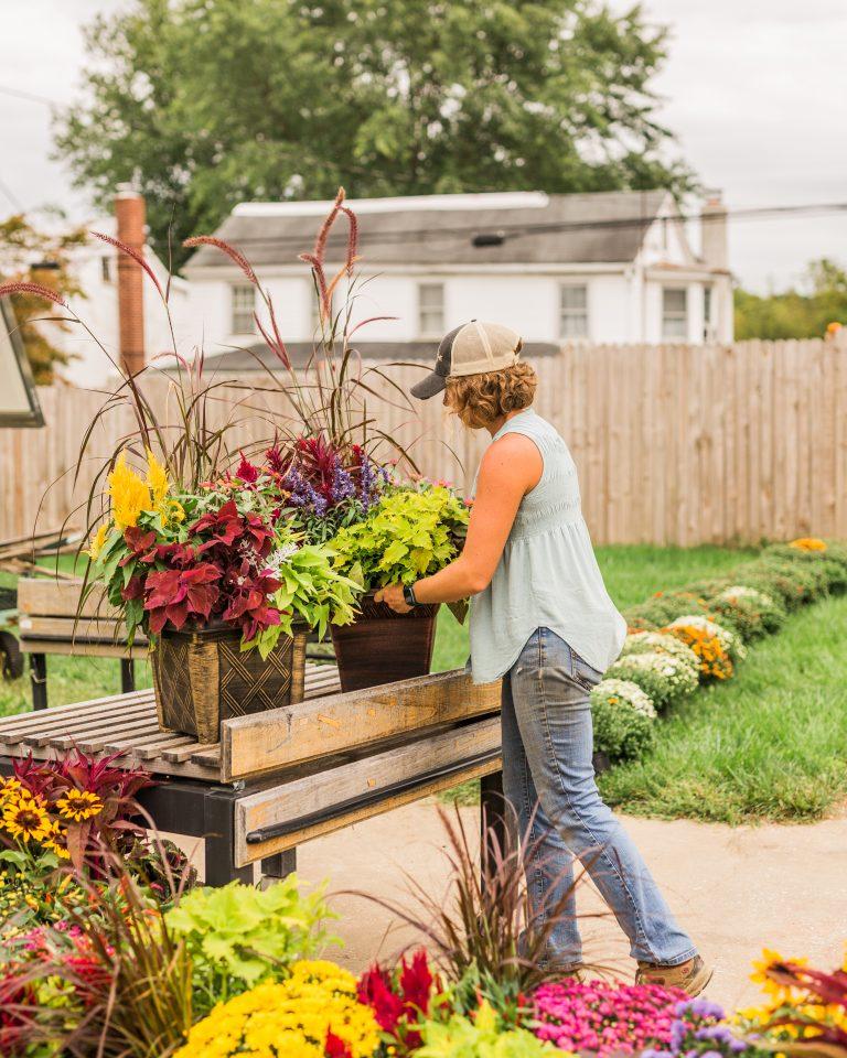 Olivine Fox - Local Homestead Products - Maryland Farm -New Windsor Maryland Market - Carroll County Maryland - Pumpkins - Mums