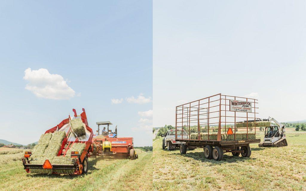 Olivine Fox - Suport Local Farmers - Maryland Farm - Carroll County Maryland Photographer - Farm Photographer - Ag Photographer - Agriculture Photographer - Maryland Agriculture